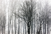 Fototapet - Abstract Trees, black and white