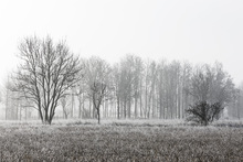 Canvas print - Frosty Morning, black and white