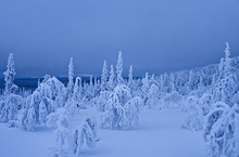 Wall mural - Blue Winter in Lapland, Sweden