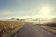 Canvas print - Road to Rolfstorp, Sweden
