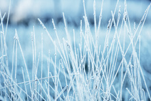 Canvas print - Winters Grass