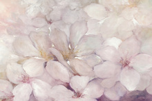 Canvas print - Apple Blossoms