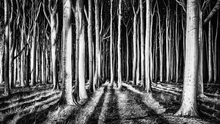 Canvas print - Ghost Forest, black and white