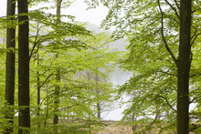Wall mural - Beech Forest at the Water