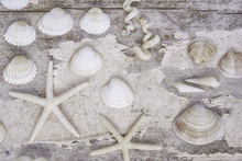 Wall mural - Beach Treasures White