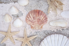 Wall mural - Beach Treasures