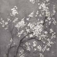 Wall mural - White Cherry Blossoms I on Grey Crop