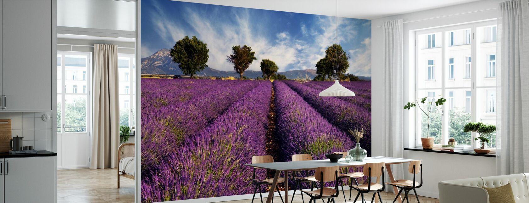 Champ de Lavande en Provence - Papier peint - Cuisine