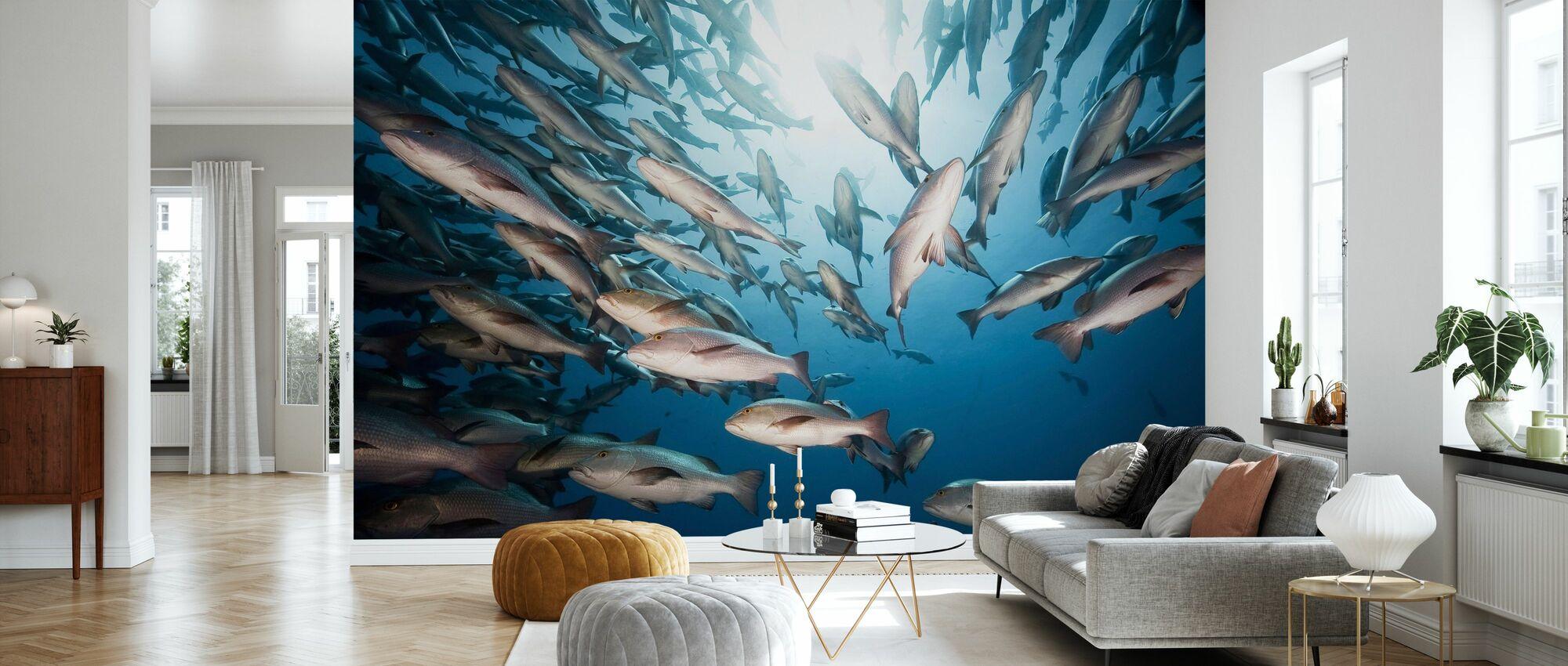 Mangrove Snappers - Wallpaper - Living Room