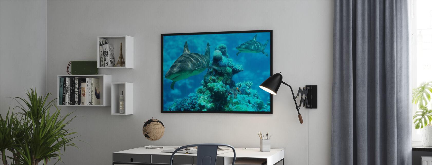 Shark Bommie - Kehystetty kuva - Toimisto