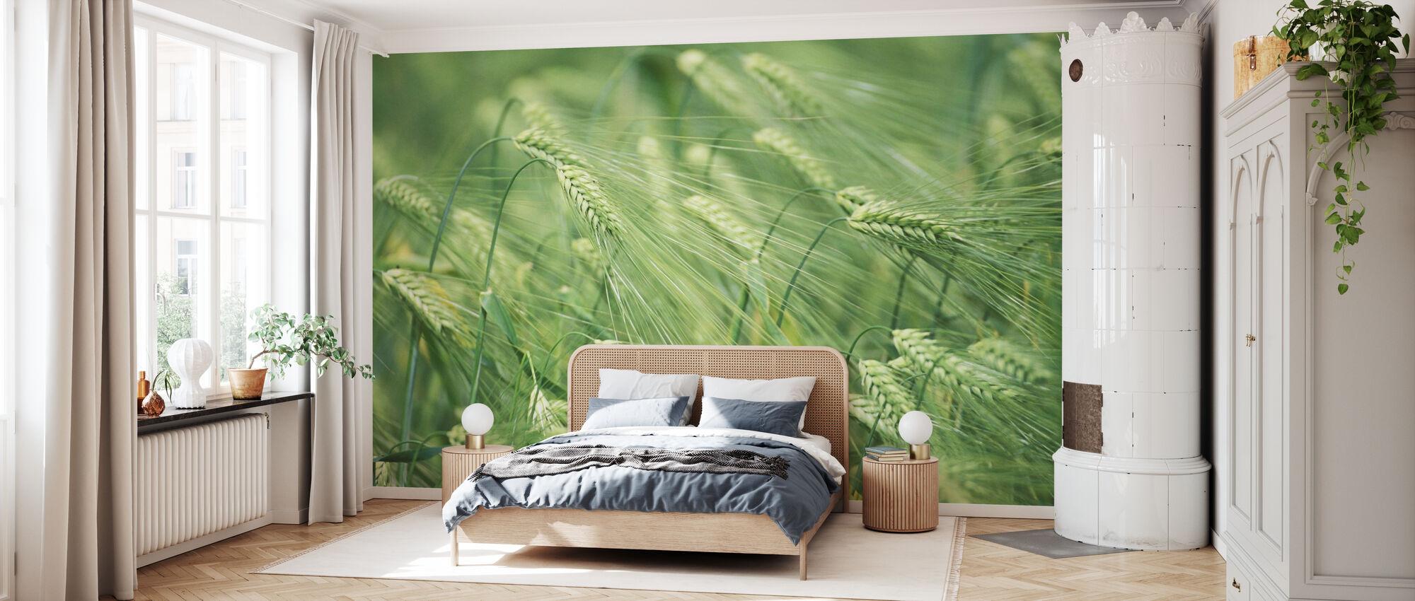 Barley Heads - Wallpaper - Bedroom
