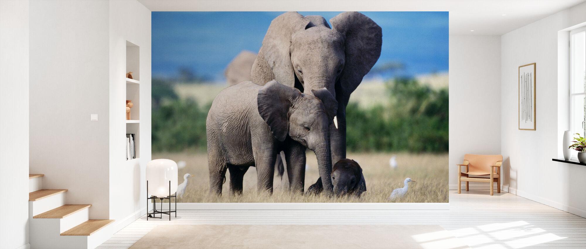 Famiglia Elefante - Carta da parati - Sala