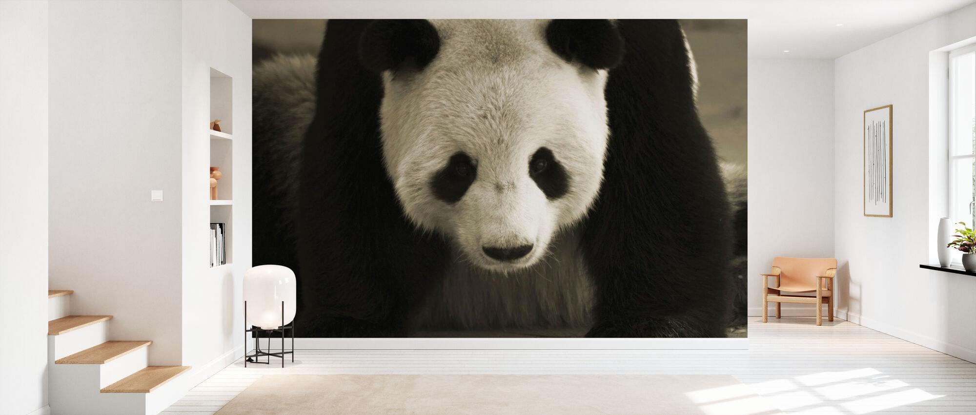 Giant Panda - Wallpaper - Hallway