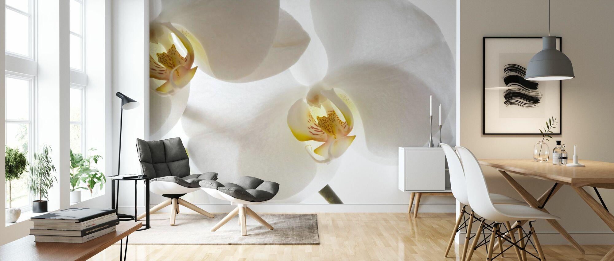 Orchidées blanches - Papier peint - Salle à manger