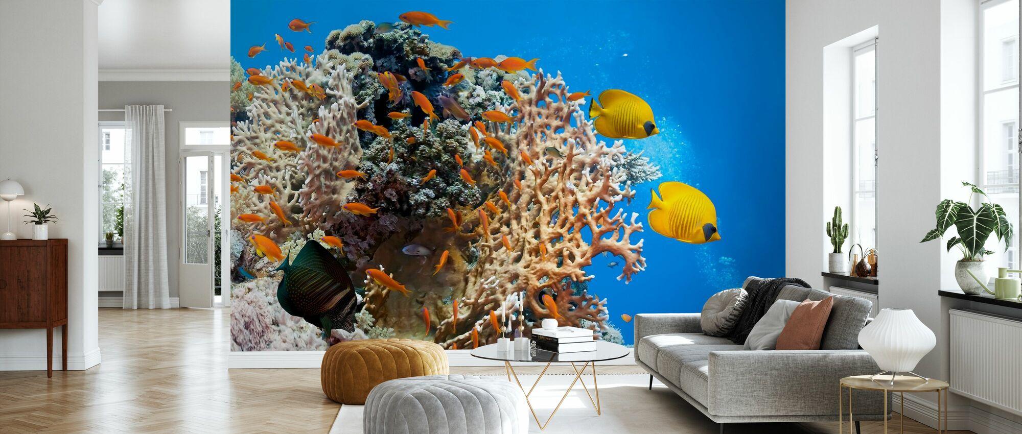 Coral Scene - Panorama - Wallpaper - Living Room