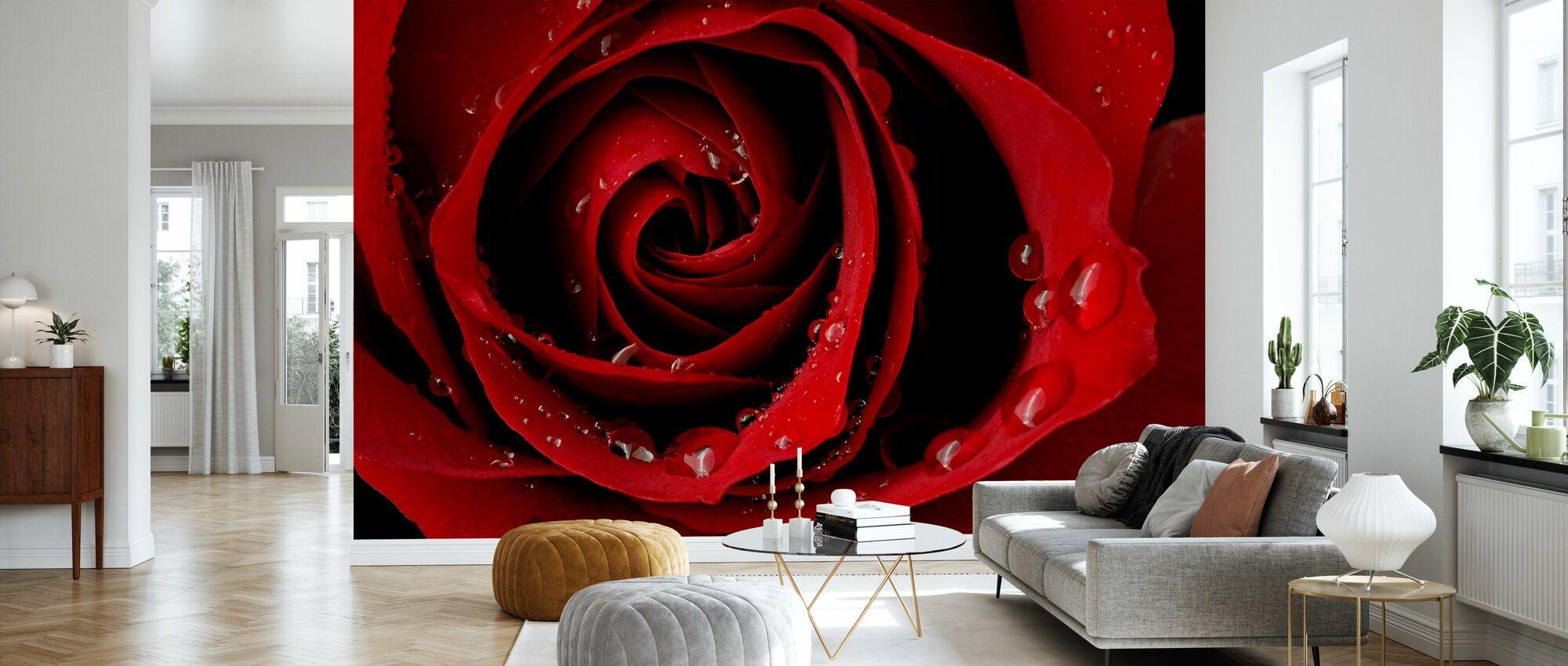 Rosa roja oscura - Papel pintado - Salón