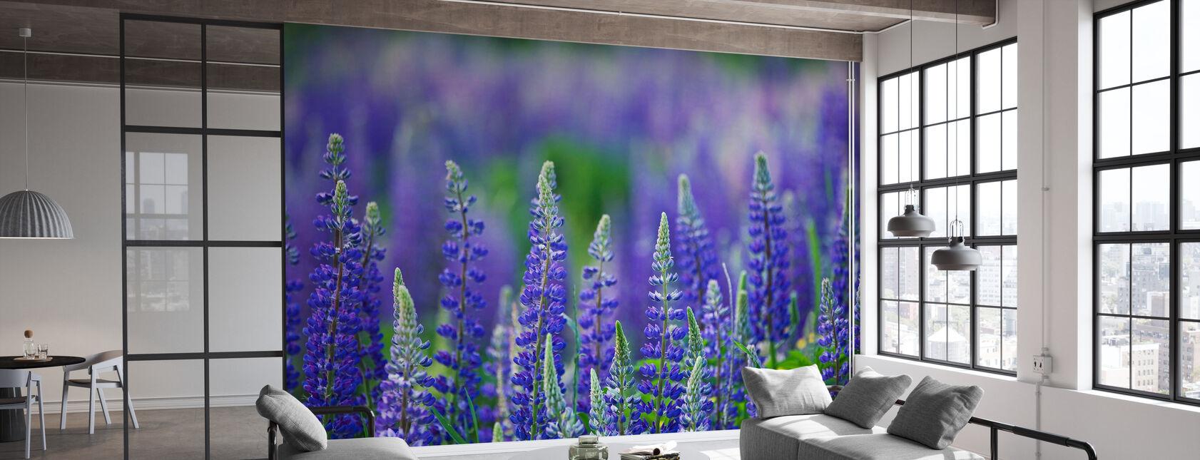 Blue Lupins - Wallpaper - Office
