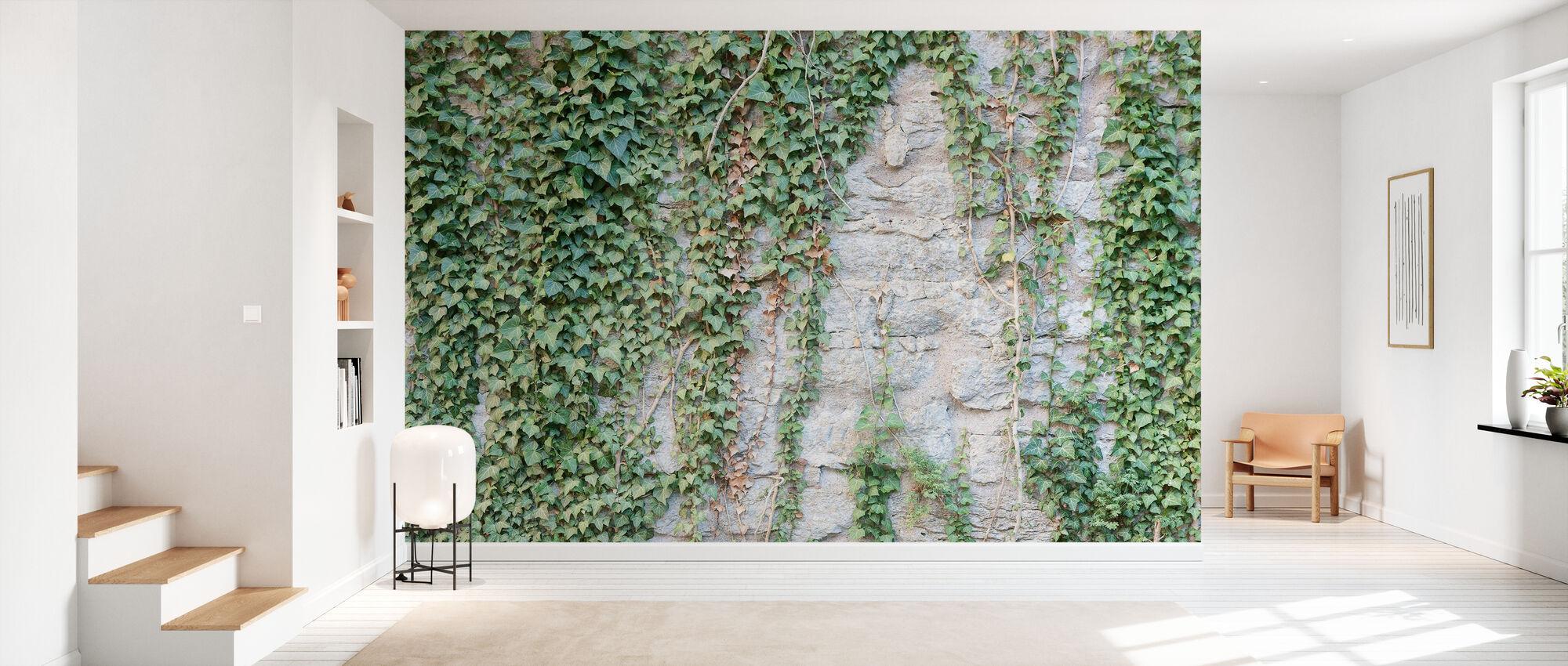 Murgröna vägg - Tapet - Hall