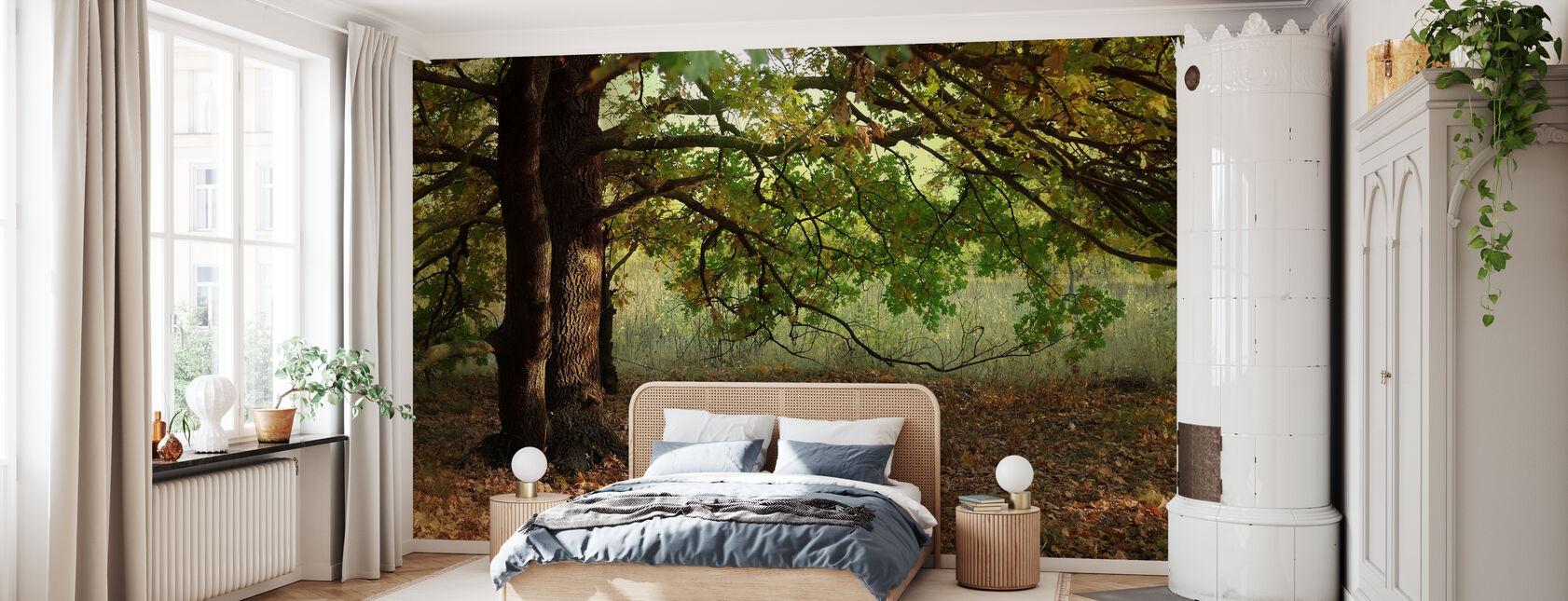 Abendsonnenstrahlen auf Herbstblättern der Eiche - Tapete - Schlafzimmer
