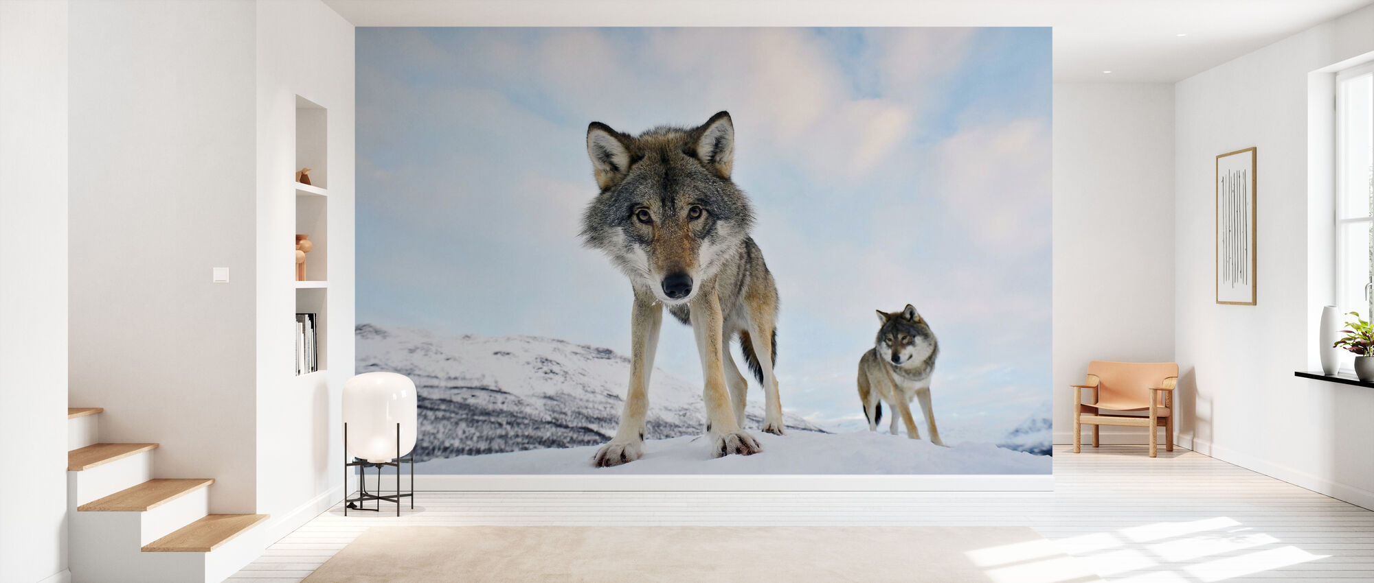 Interessert Grey Wolf - Tapet - Gang