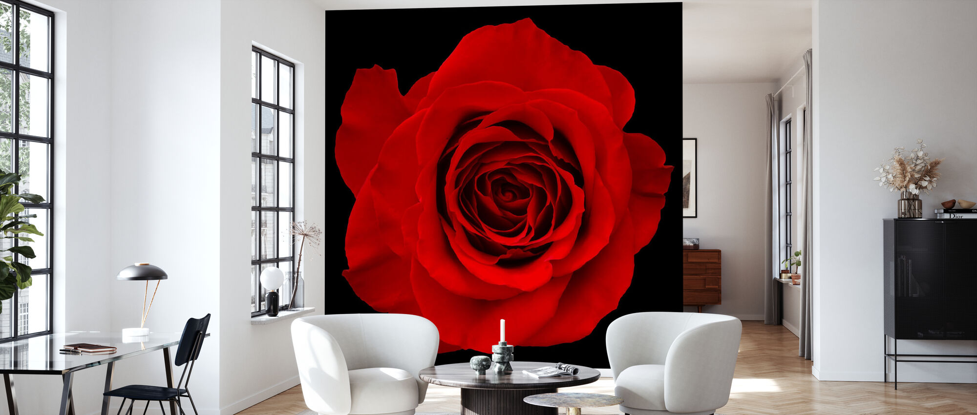 Red Rose Isolated - Wallpaper - Living Room