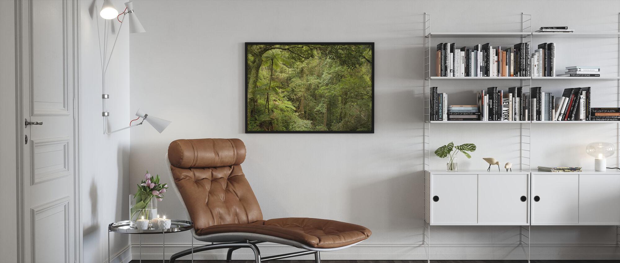Bunya Mountains National Park - Poster - Living Room