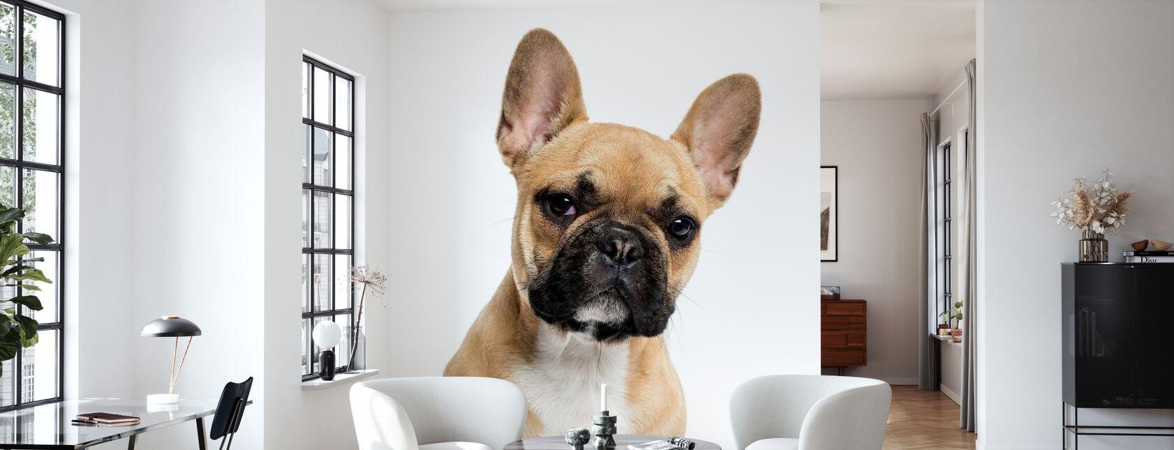 Portræt Af En Fransk Bulldog - Tapet - Stue