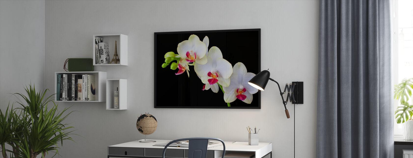 Witte orchideeën op zwarte achtergrond - Ingelijste print - Kantoor