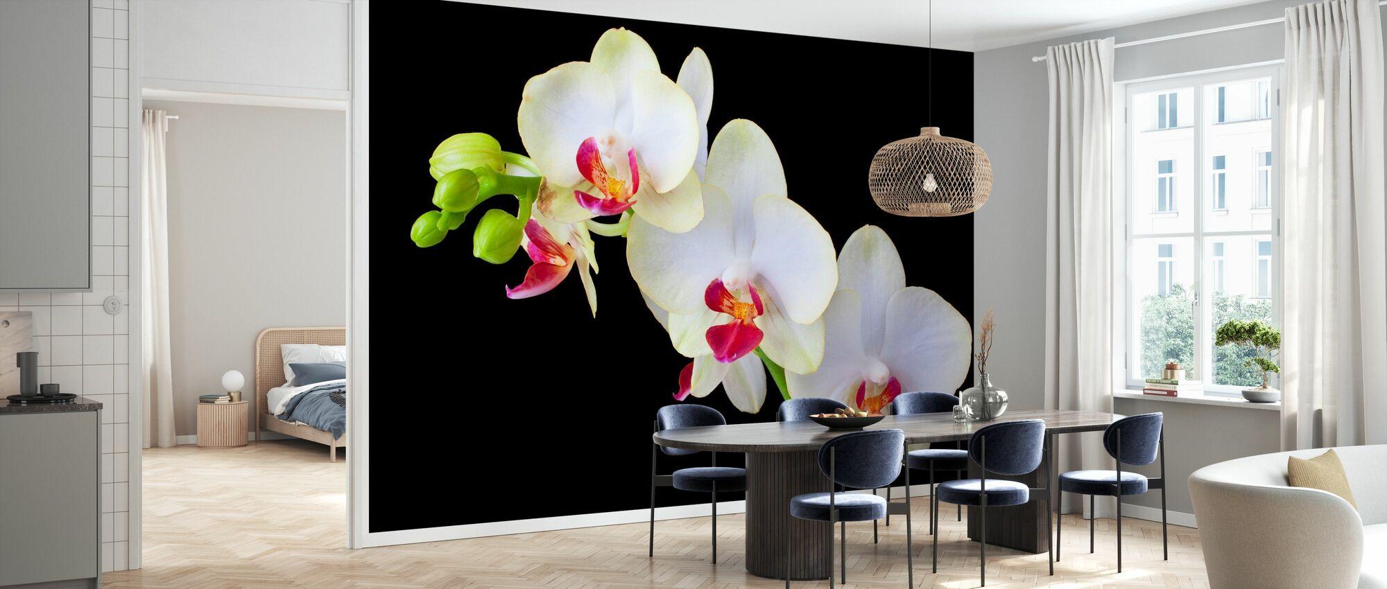 Hvide orkideer på sort baggrund - Tapet - Køkken