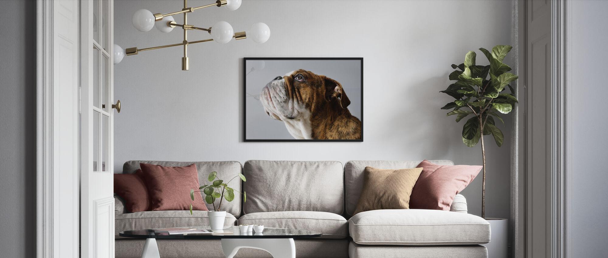 Engelsk Bulldog - Innrammet bilde - Stue
