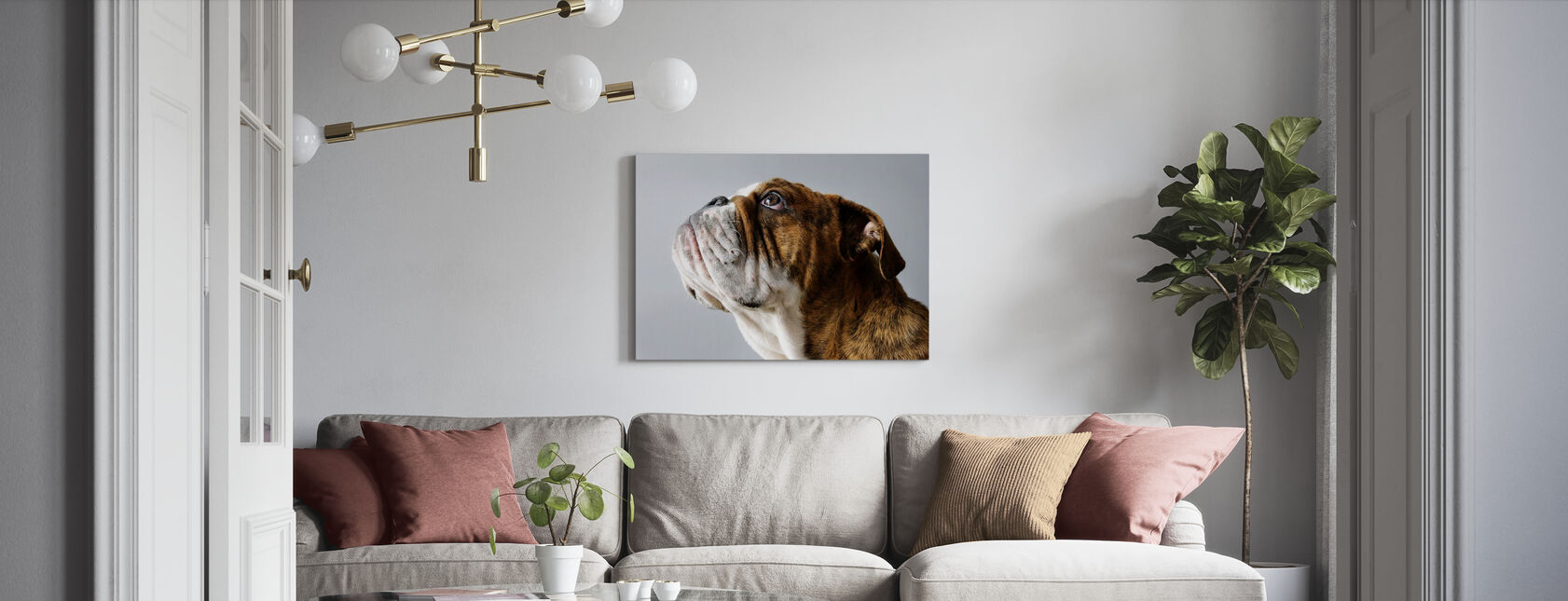 English Bulldog - Canvas print - Living Room