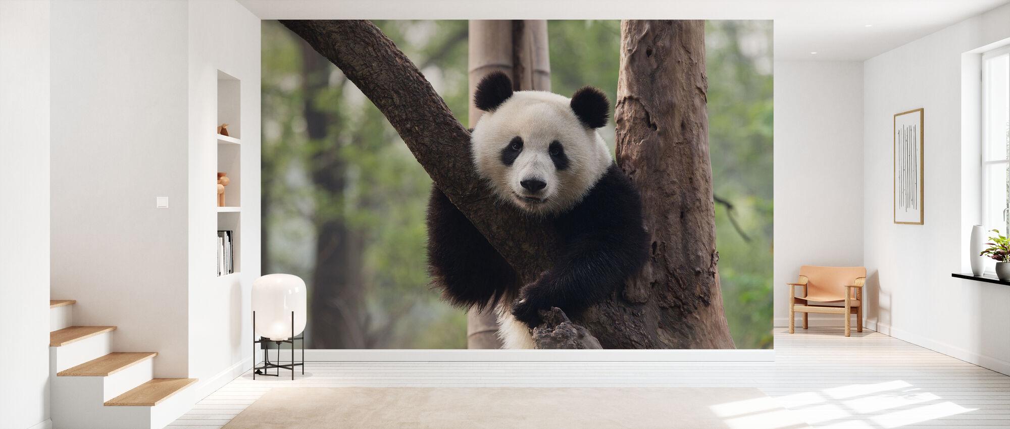 Sweet Panda - Wallpaper - Hallway