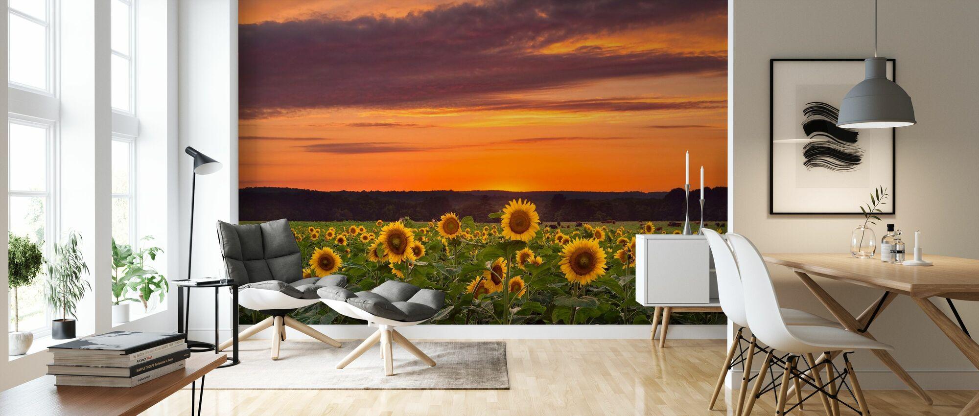 Solnedgang over solsikker - Tapet - Stue