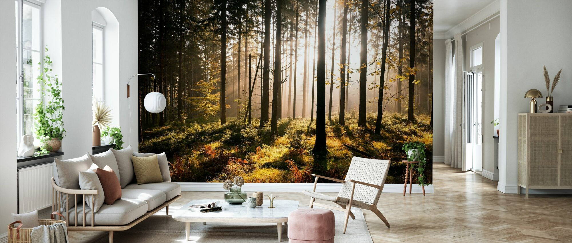 Fall Forest with Sunrays - Wallpaper - Living Room