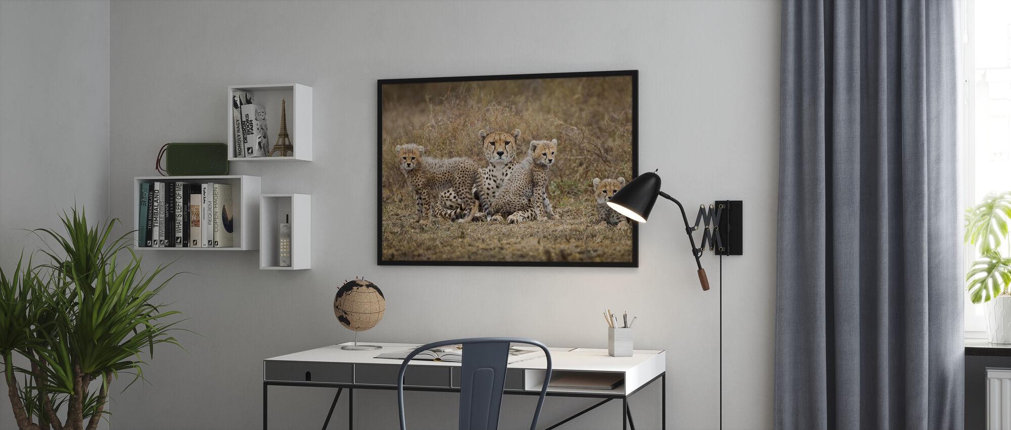 Cheetah Cubs och mor - Poster - Kontor