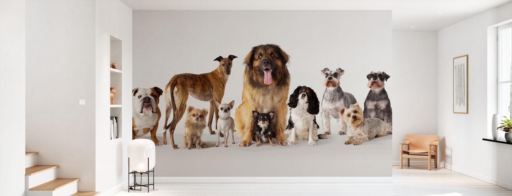 Gruppe Portrett Av Hunder - Tapet - Gang