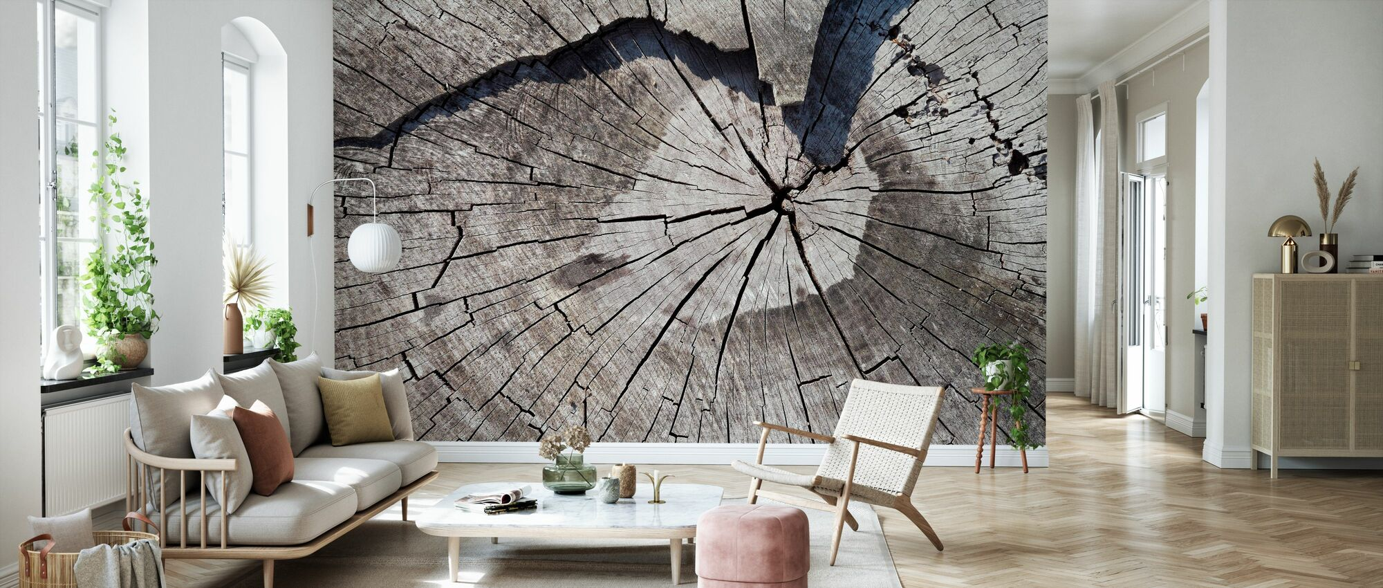 Old Tree Trunk - Wallpaper - Living Room
