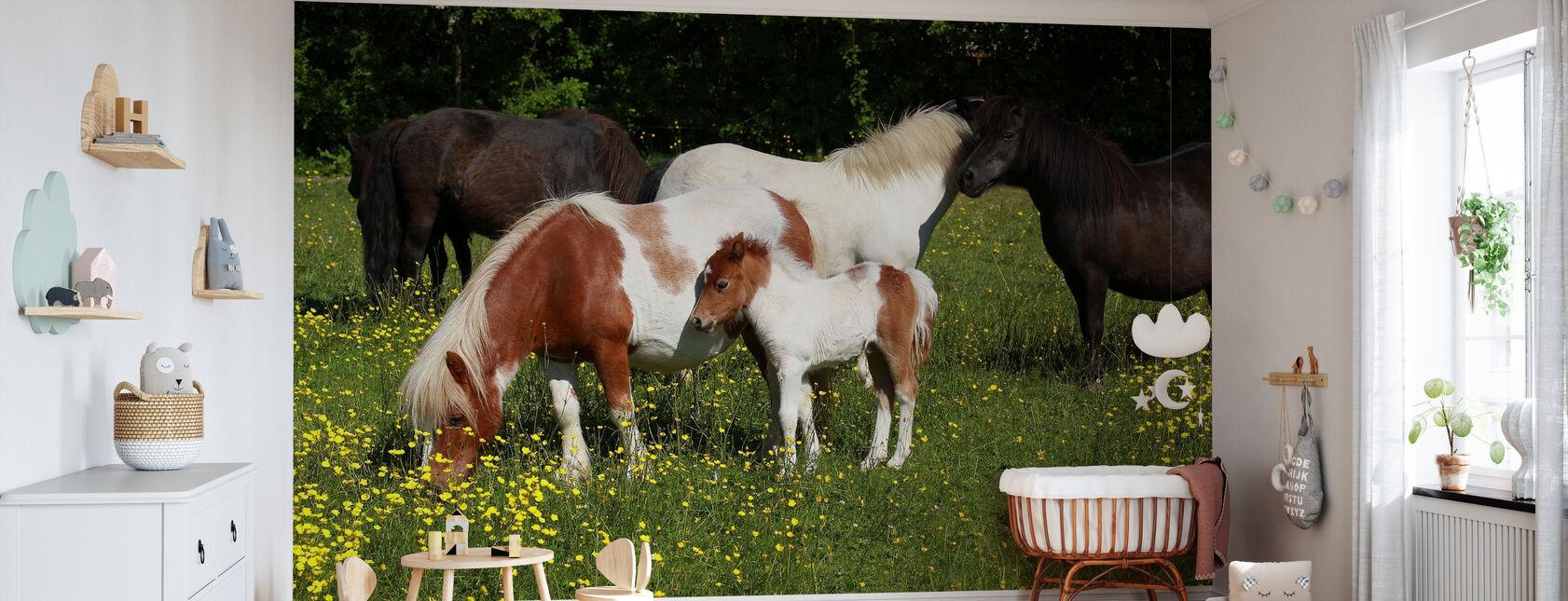 Shetland Ponies - Wallpaper - Nursery