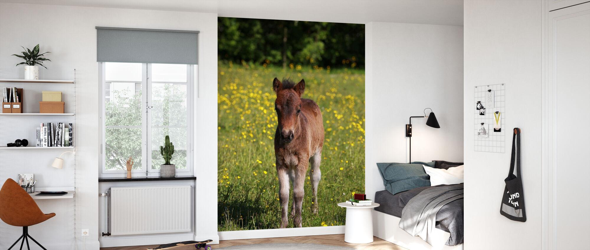 Shetland ponnyföl - Tapet - Barnrum