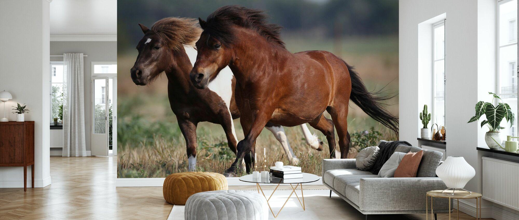 Shetland-ponnyer i fält - Tapet - Vardagsrum