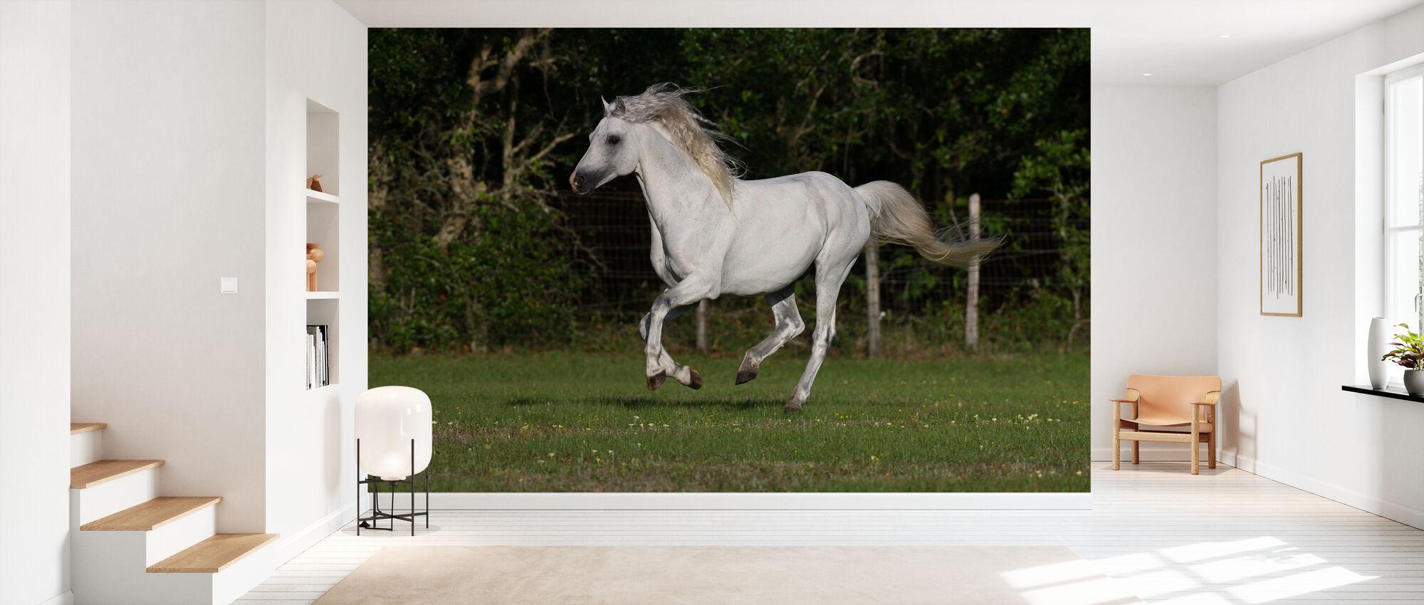 Walesisk ponny - Tapet - Hall