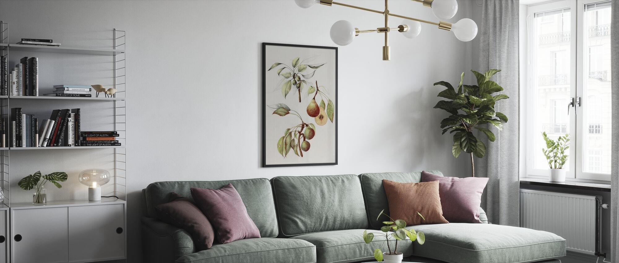 Pine Street Pears - Poster - Living Room