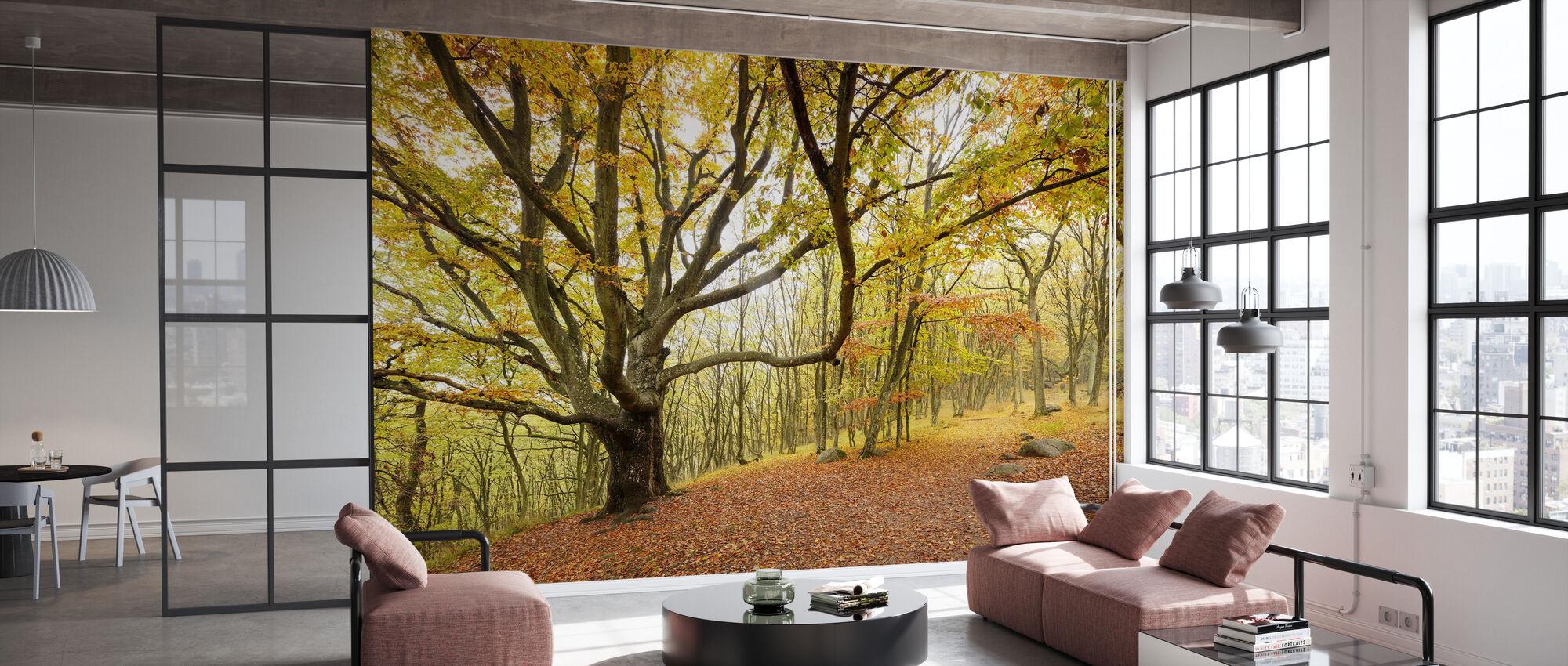 Autumn Trees in Stenshuvud, Sweden, Europe - Wallpaper - Office