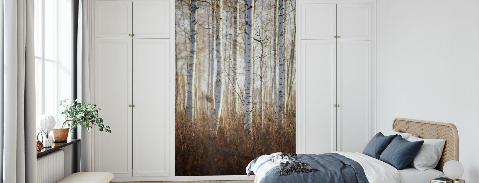 Birkenwald in Dalarna, Schweden, Europa - Tapete - Schlafzimmer