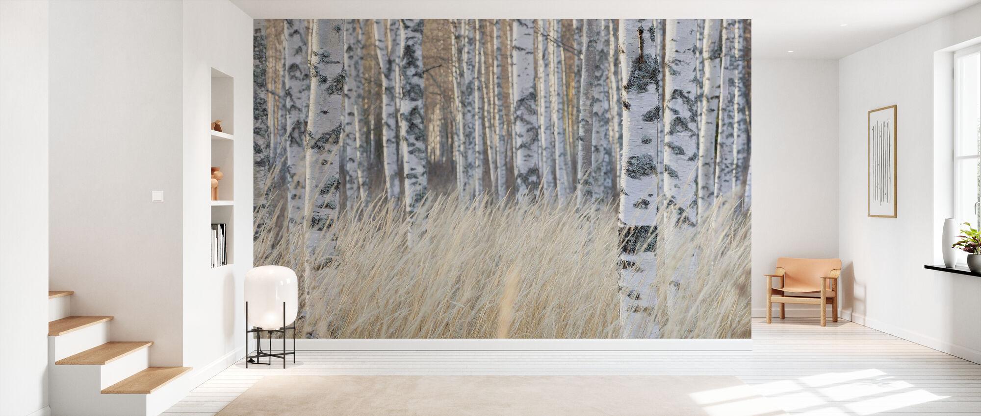 Light Birch Forest - Wallpaper - Hallway