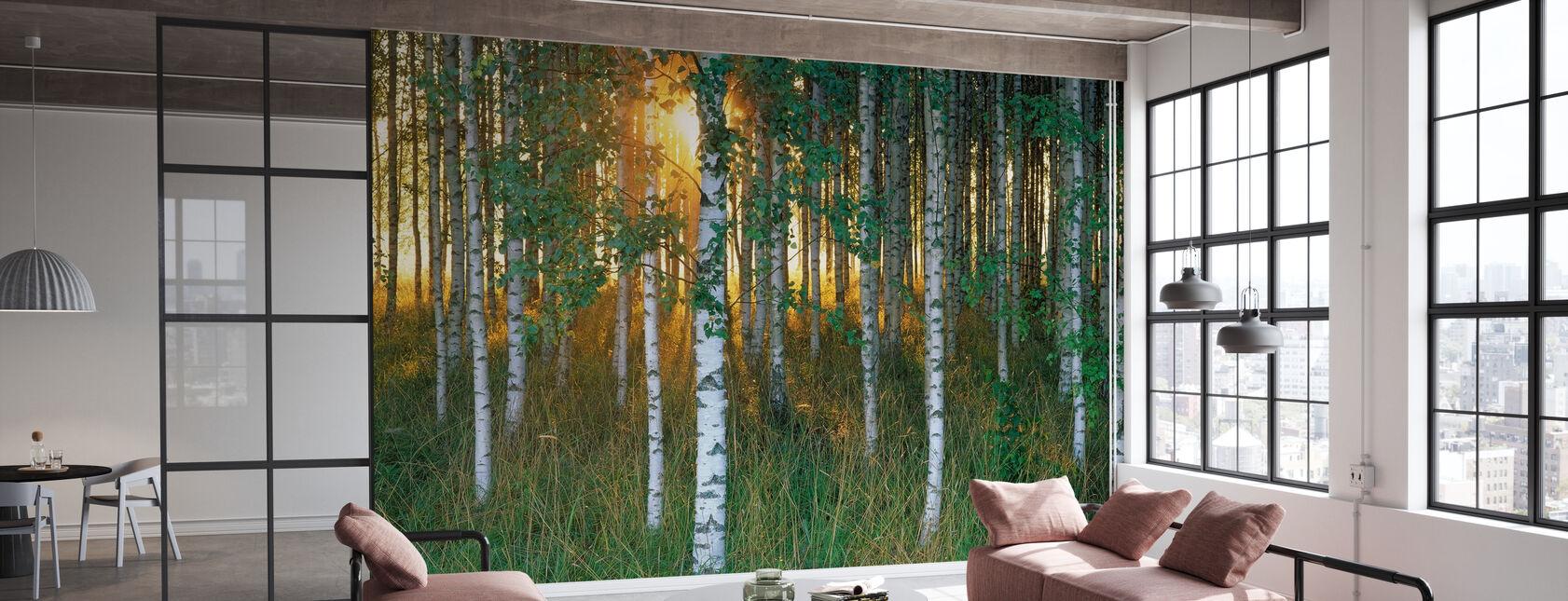 Sunbeam gjennom Birch Forest - Tapet - Kontor