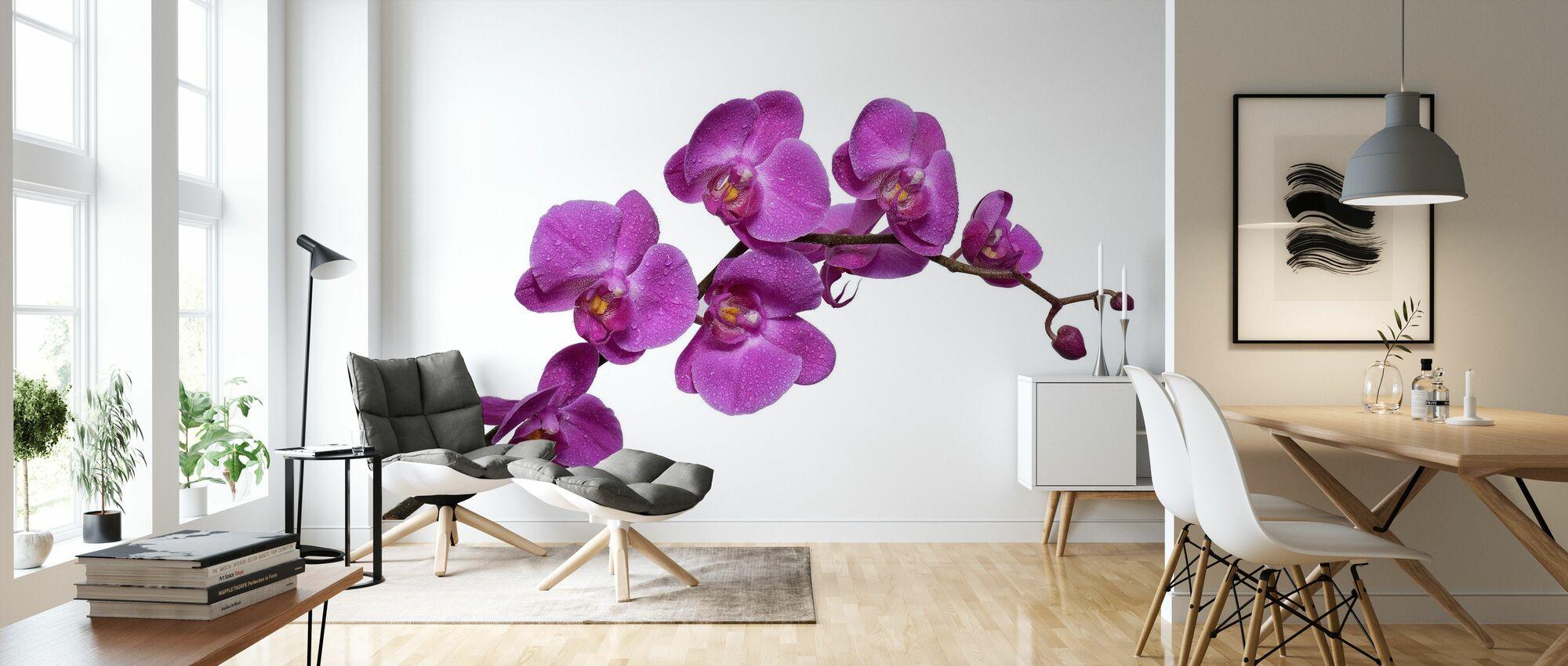Skarpe orkideer - Tapet - Stue