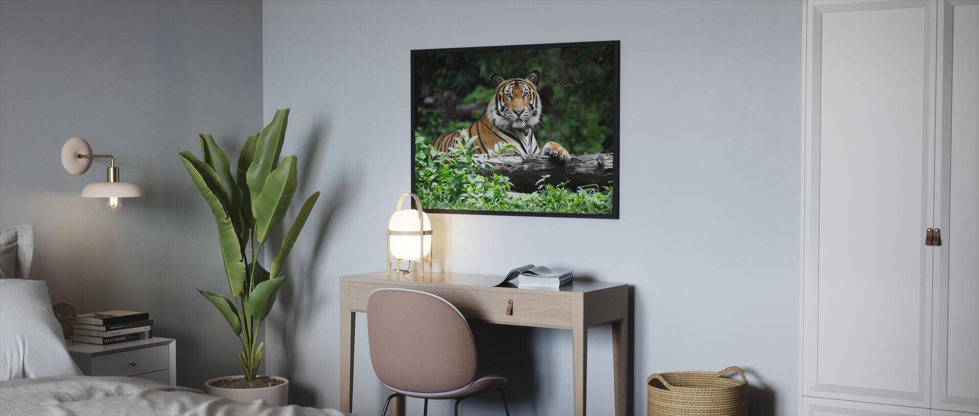 bengal tiger - Inramad tavla - Sovrum
