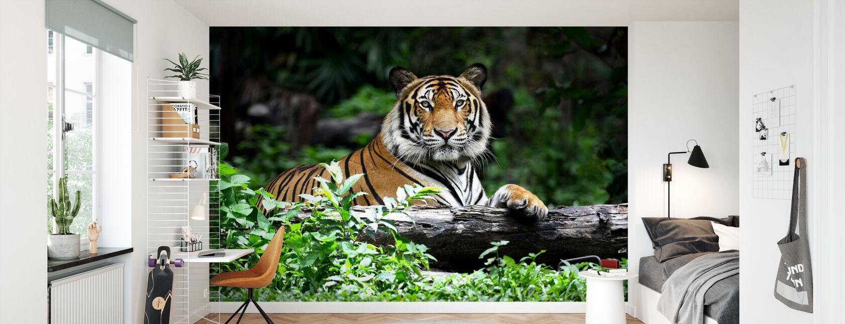 bengal tiger - Tapet - Barnrum