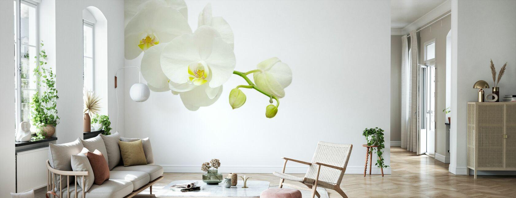 Hvit Elegant Orkide - Tapet - Stue